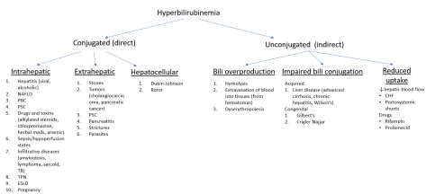 Hyperbilirubinemia breakdown